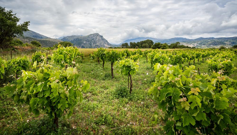 A Trio of Fine Cretan Wines for the Devout Oenophile