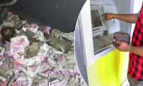 Rat Breaks Into Indian ATM and Dies After Consuming $18,000 Worth of Bank Notes