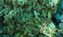 Kale's Healthy Reputation Takes a Knock in 'Dirty' Pesticide Report