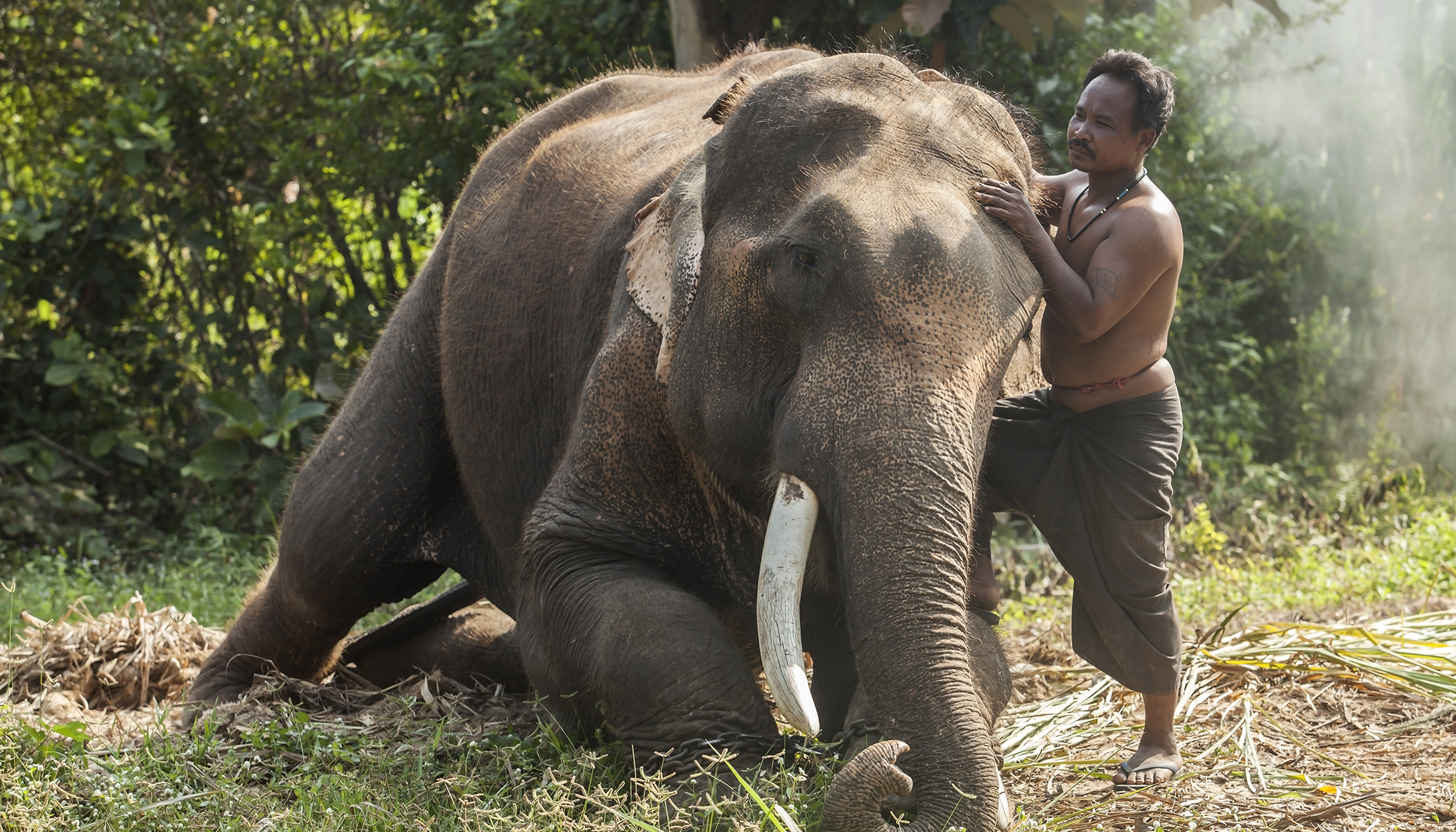 Elephant Rushes to the Aid of His Caretaker Who Was Getting 'Attacked'