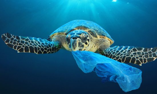 Marine Life Defenders Create Shocking Ad Campaign With 3D Graphics to Get Your Attention