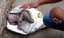 Dog 'Screams' As Rescuer Helps Him Out of a Bag, He's Hardly Recognizable 6 Weeks Later