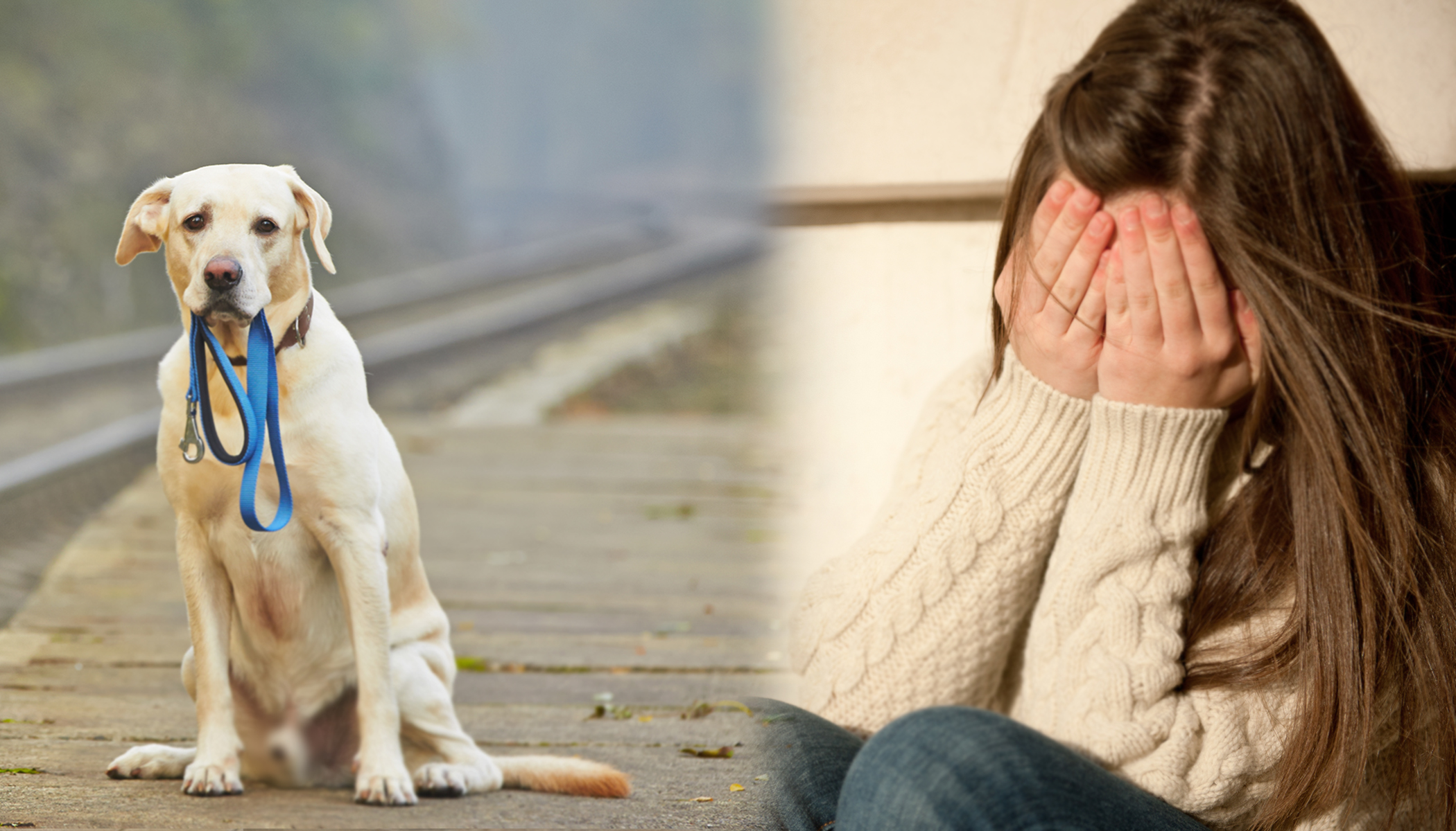 Losing Your Pet Can Be Heartbreaking, Here Are Some Hints on How to Cope