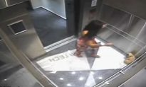 Instagram Model Caught on Video Kicking Her Small Dog Gets Probation in Plea Deal