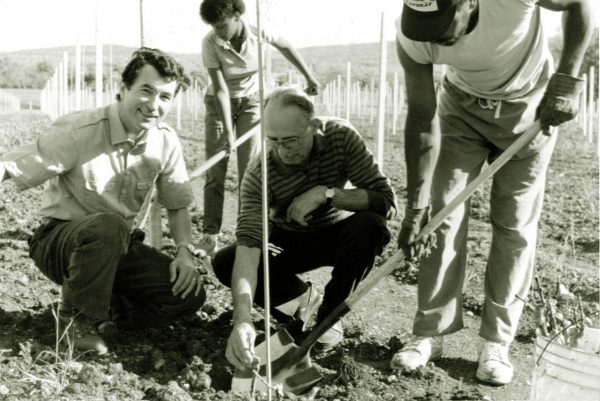 First grape plantings at Barboursville Vineyards in the 1970s