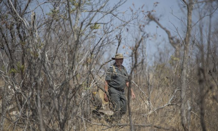 Frik Russouw, senior investigator of the South African National Parks Environmental Unit, walks towards the scene where a poached rhino was found in the Kruger National Park in South Africa on Aug. 21, 2018. (Wikus De Wet/AFP/Getty Images)