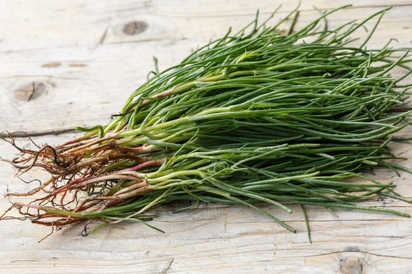 bunch of agretti monk's beard
