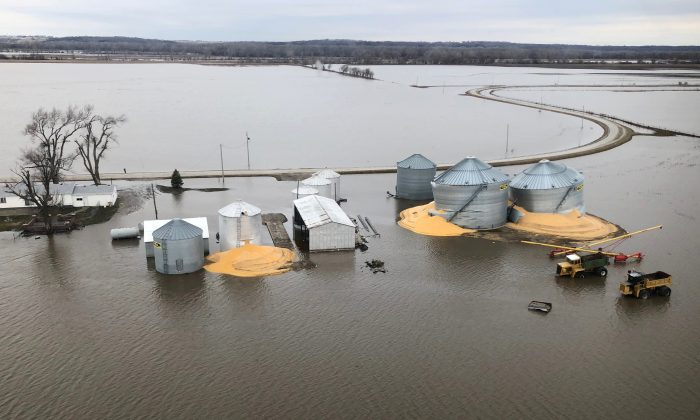 The contents of grain silos which burst from flood damage are shown in Fremont County Iowa, on March 29, 2019. (Tom Polansek/Reuters)