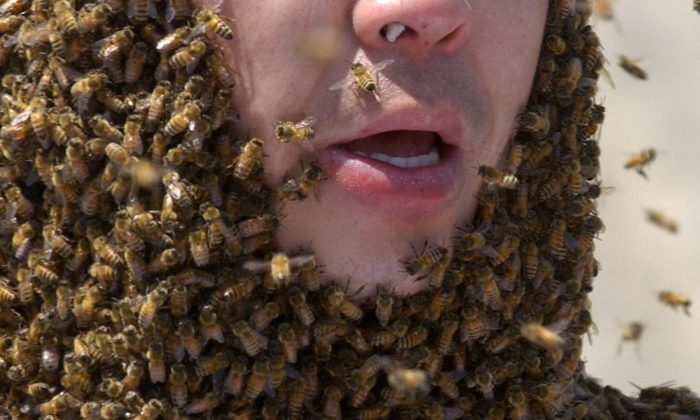 An Arizona man died after being attacked by a swarm of bees at his home, on April 7, 2019. (Jung Yeon-Je/AFP/Getty Images)