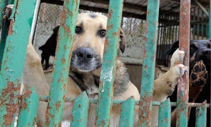 Dogs in a shelter. (JANEK SKARZYNSKI/AFP/Getty Images)