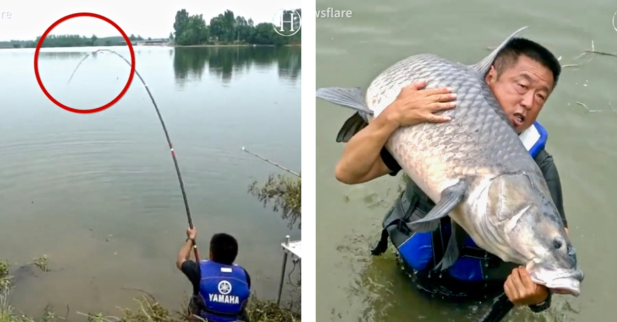 'Sportfishing Master' Reels in 165-Pound Carp After an Intense Fight