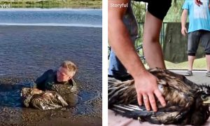 Drone Captures Photographer's Incredible Crawl Through Thick Mud to Rescue Baby Eagle