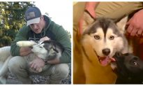 Man Saves Cute Husky but Has to Give It Away After Bonding