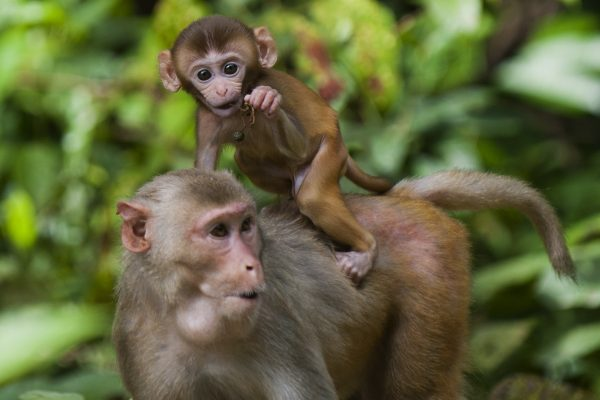 Rhesus and baby