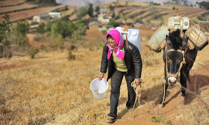 A Chinese villager uses her mule to carry containers of water collected from an underground well miles away from her village during a severe drought in Kunming, southwest China's Yunnan province on March 31, 2010. (STR/AFP/Getty Images)