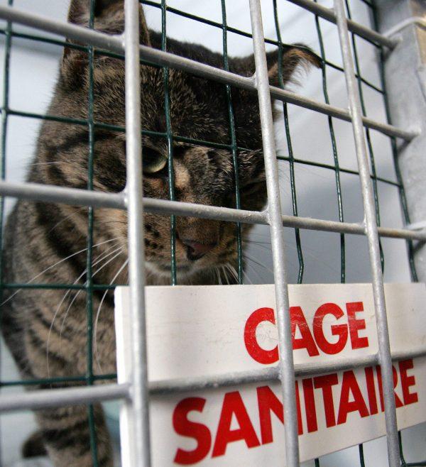 Cargo container cat