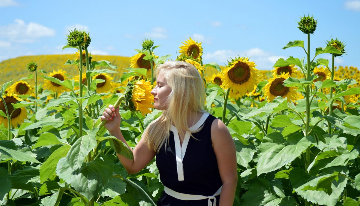 Woman records sunflowers 'singing,' it sounds like music from other dimension
