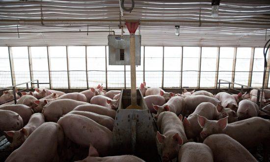 Consumers Are Losing the War Against Meat Antibiotics