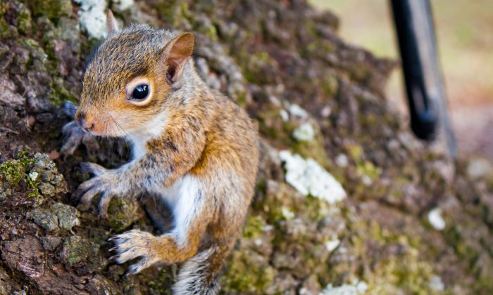 Brilliant Adorable Squirrel Comes Back To Rescuers Home After Human Download Free Architecture Designs Photstoregrimeyleaguecom