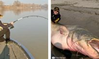 Massive 280-Pound Catch Caught on Tape