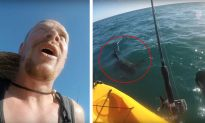 Man Vs Shark: Viral Video Shows Californian Kayaker Fends off a Hammerhead With a Paddle