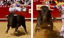 Video Captures the Thrilling Moment Daredevil Narrowly Dodges Charging Bull
