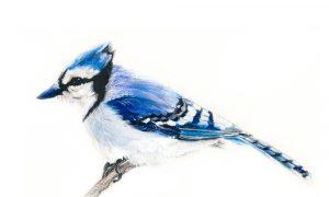 A Berkshire Journal: Feathered Friends