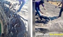 Injured Dog Was Trapped in Well for Several Days, It Saved by Persistence of Good Samaritans