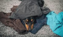 Dog Smells Late Owner's Scent in Old Clothes After 6 Years and Can't Stop Snuggling