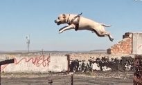 Video: Meet TreT, the Free-Running Dog Who Climbs and Leaps Walls Like a Parkour Pro