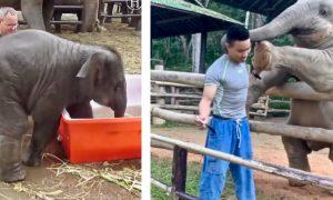 Video: Dumbo's Going Bananas In The Mop Bucket