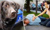 If a Service Dog With No Owner Approaches You, It Means They Need Your Help