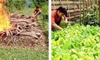 Watch How An Organic Vegetable Garden Is Created