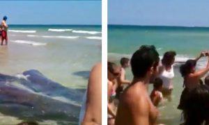 What If You Saw This on Your Vacation? Up Close and Personal with a Manatee