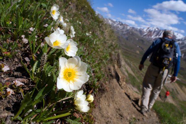 Photos Brian Adams Denali National Park And Preserve 12.jpg