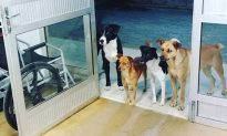 Gang of Dogs Turn Up at Hospital to Wait for Homeless Owner Who's Being Treated Inside