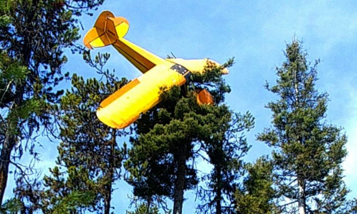 This undated photo provided by the Valley County Sheriff's Office shows a small plane where it came to rest at the top of a tree near the resort town of McCall, Idaho, on April 22, 2019. (Undersheriff Jason Speer/Valley County Sheriff's Office via AP)