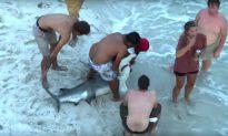 Video: Swimmers Shocked by Huge Hammerhead Shark