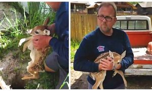 Heartwarming Moment Baby Deer Reunites With its Mother After Getting Trapped in Hole