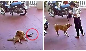 Video: Woman Didn't Realize She Dropped Money Until Four-Legged Good Boy Returned It to Her