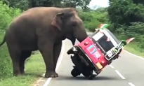 Video: Moments When Wild Pedestrians Show Humans Who's the Real Boss of the Road
