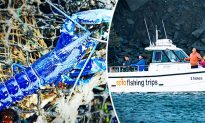 Fisherman Hauls In Stunning Sapphire-Blue Lobster–Said to Be 1 in 2 Million Catch