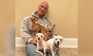 Heartbroken Man Who Was Saved by a Chihuahua Goes on a Mission Rescuing Over 50 Tiny Dogs