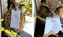 Owl With Attitude Won't Give Owner Her Mail — Watch What Happens in the End