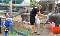Elephant Comes up Behind Painting Man, What It Does Next Is Playful