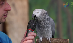 Video: Einstein the Talking Parrot Loves to Show Off Impressive 'Language' Skills