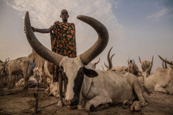 Sudan cattle keeper