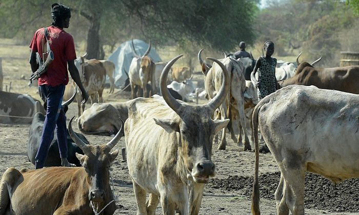 File photo showing a man armed with a rifle walks among cattle at Kirgui village in Udier, South Sudan, on March 9, 2019. (Simon Maina/AFP/Getty Images)