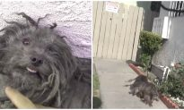 This Dog Was Adopted After a Year He Lived in the Streets