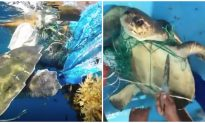 Fishermen Rescue Entangled Sea Turtle From Fishing Net